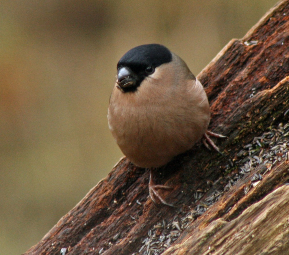 mrsfinch2