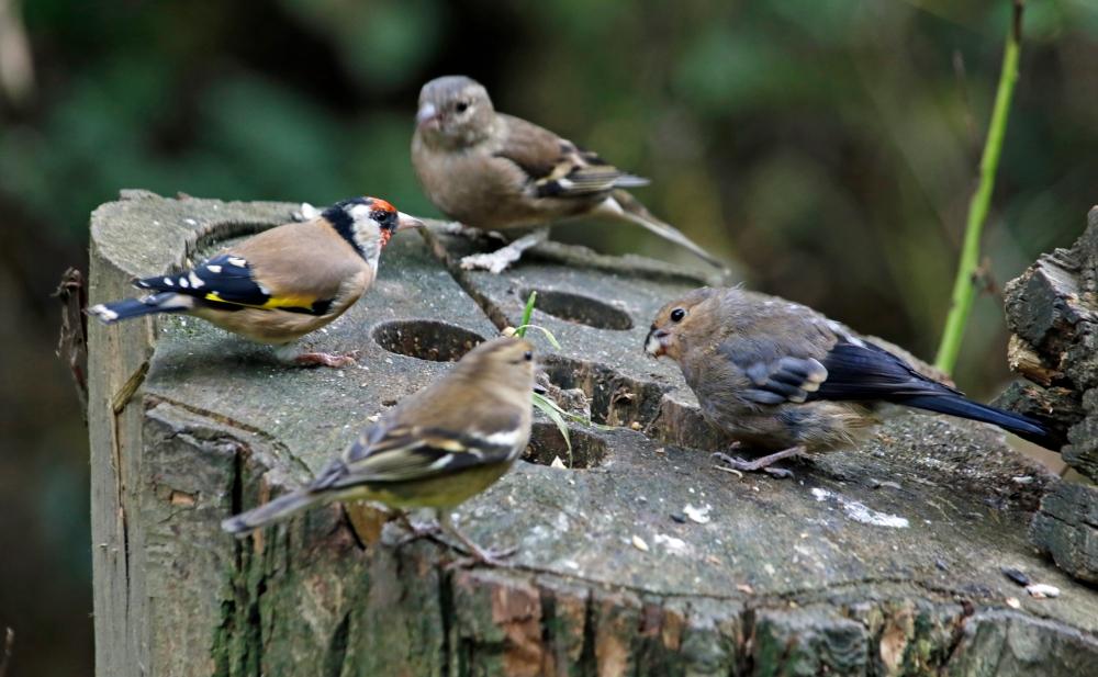Bird table dinner party