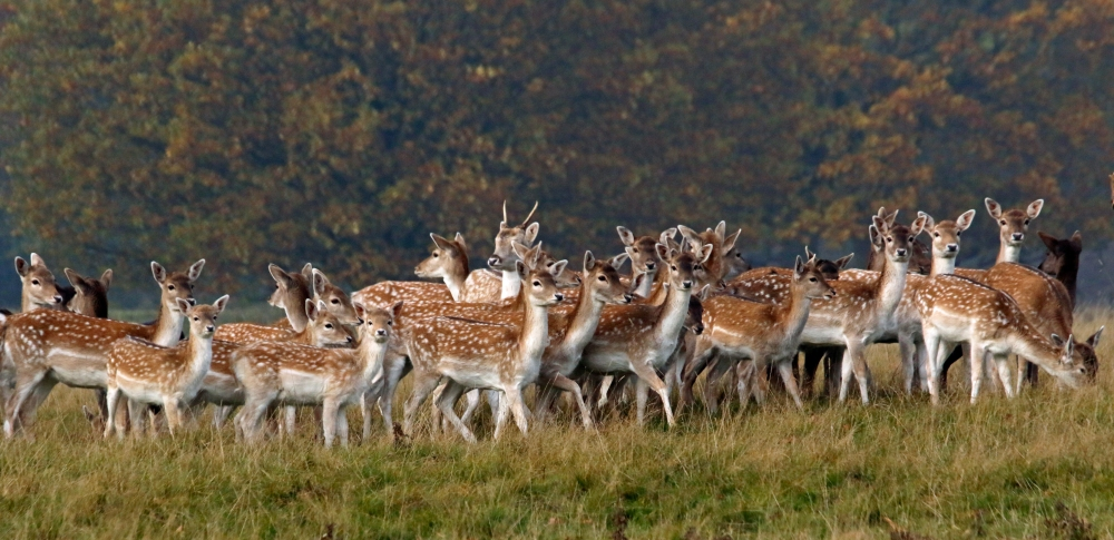 Bambi line up
